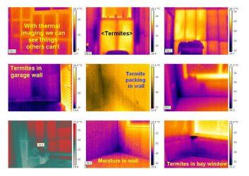 Termite-inspection-Sunshine-Coast-1024x724