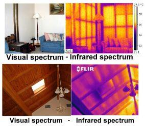 Termite-pest-inspection-Sunshine-Coast